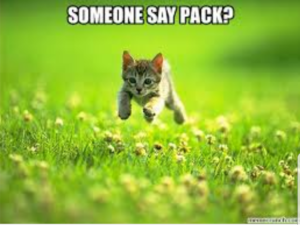 Pack Kitty